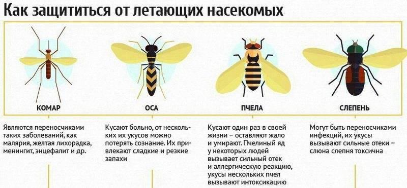 Укус осы - первая помощь и средства