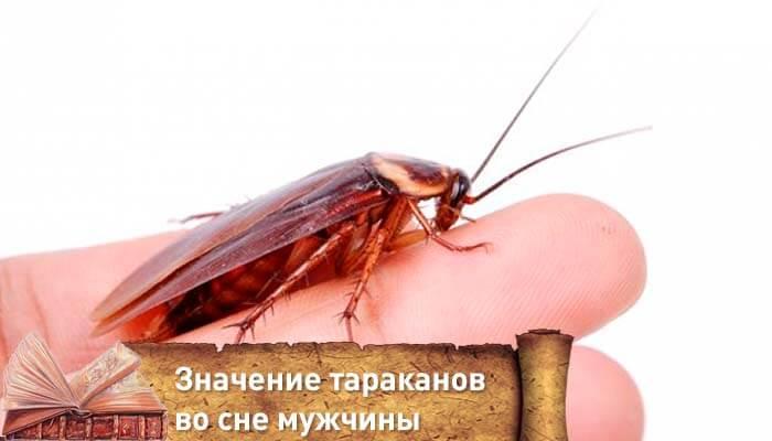 Сонник убивать рыжих тараканов. к чему снится убивать рыжих тараканов видеть во сне - сонник дома солнца