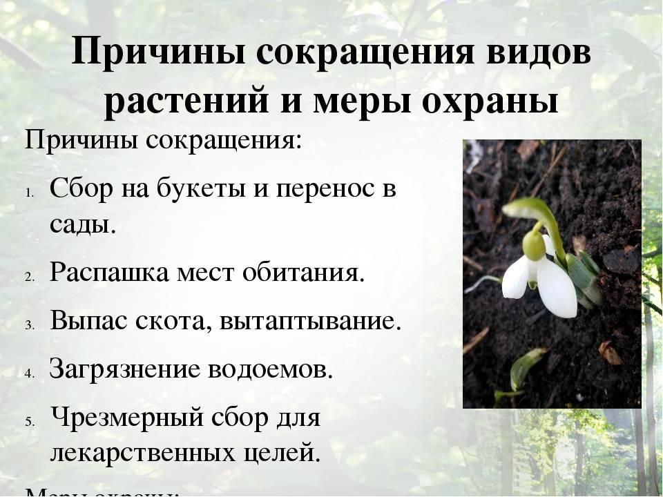 Зеленая ящерица: описание, места обитания, образ жизни, поведение, содержание
