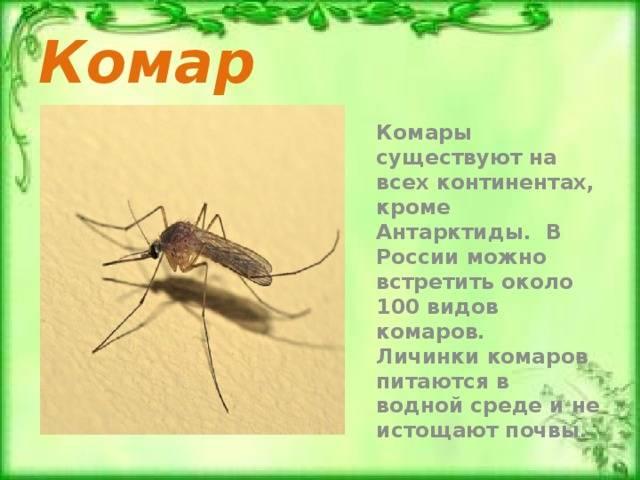 Комар – описание, чем питается, где обитает, размножение, фото