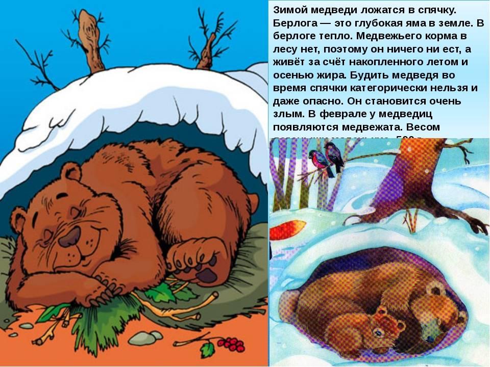 Какие животные делают запасы на зиму — other. какие животные делают запасы на зиму