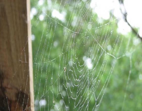 Как в доме избавиться от пауков: народные и химические методы