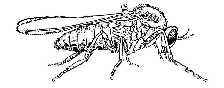 Виды мошкары и способы ее выведения