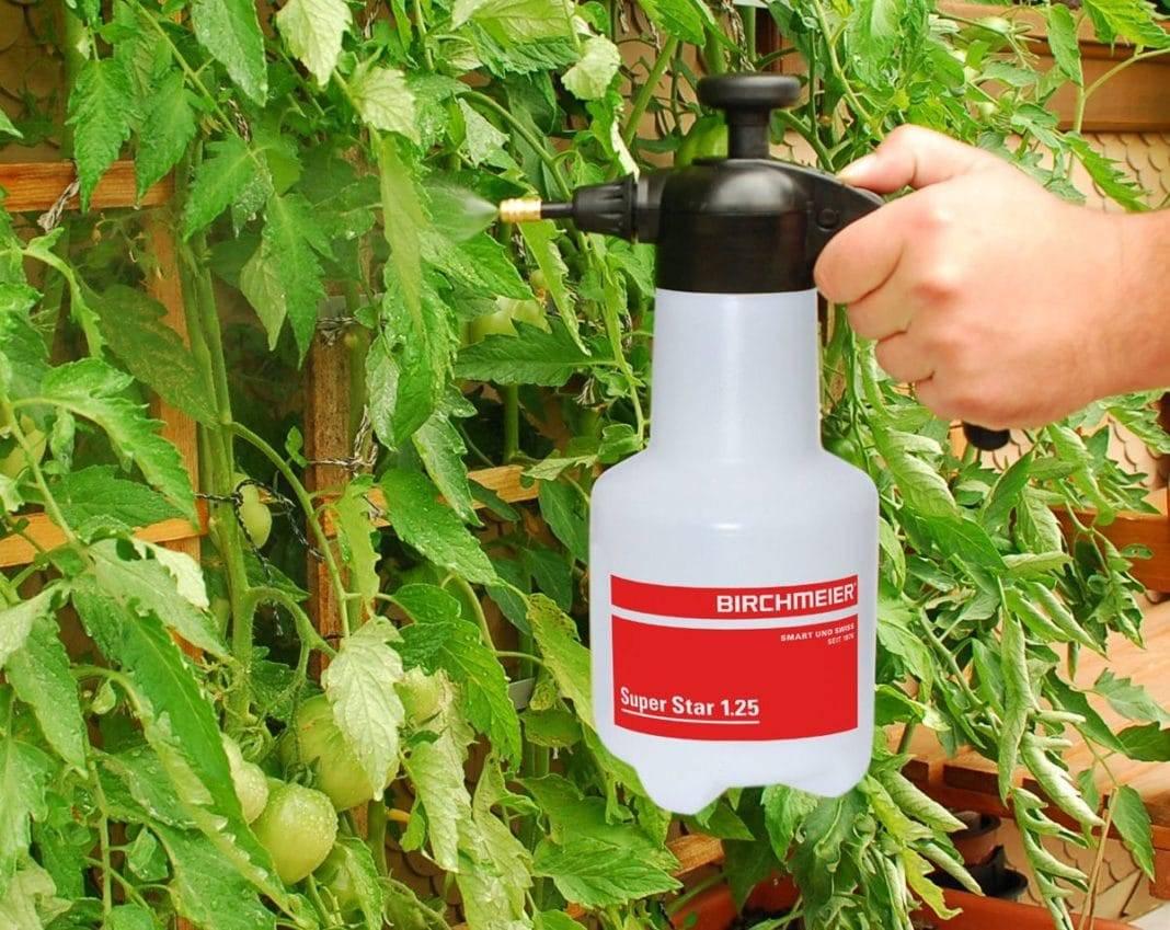 Совка на томатах – меры борьбы, фото вредителя, препараты, народные средства, видео