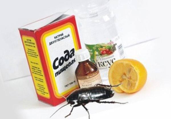 Средство от тараканов - какое самое лучшее и эффективное: народные и покупные