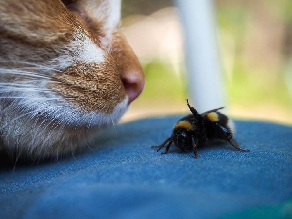 Кот ест мух