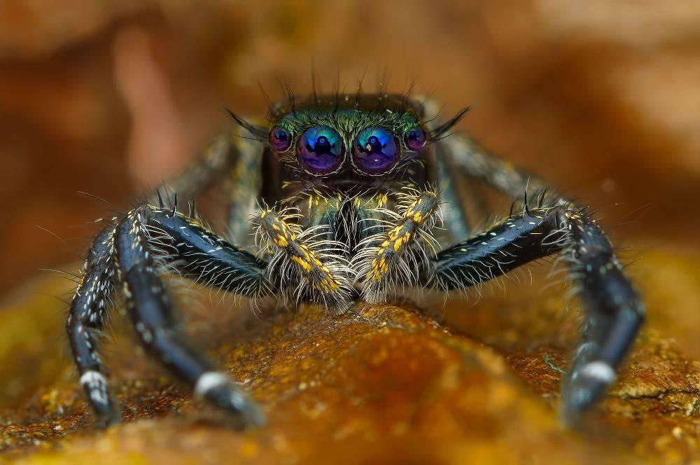 Самые красивые пауки в мире: фото, описание