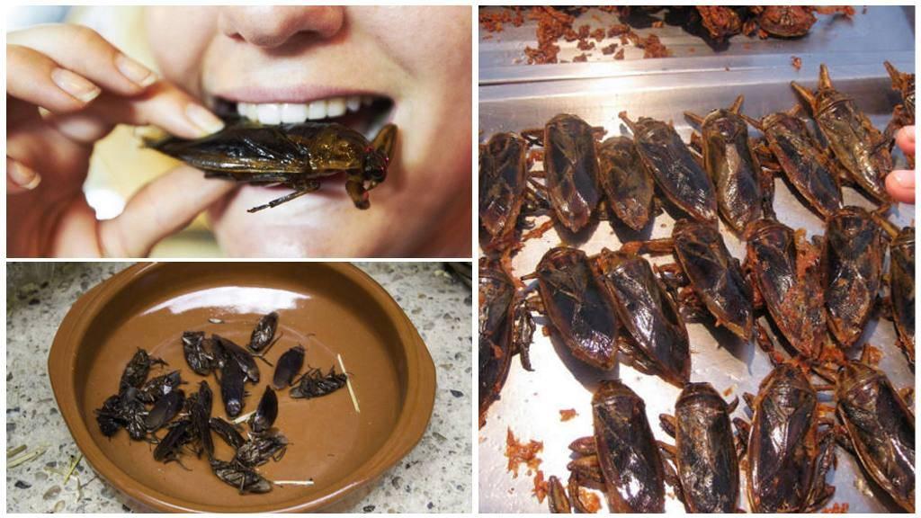 Что едят и чем питаются тараканы в квартире