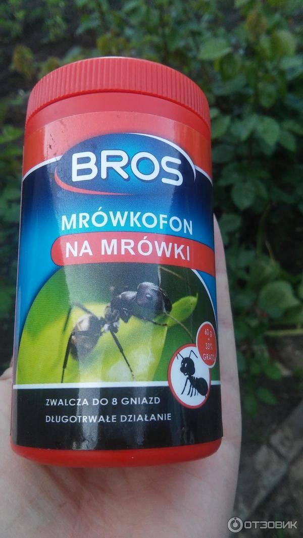 Как избавиться от муравьев на цветах — читаем суть