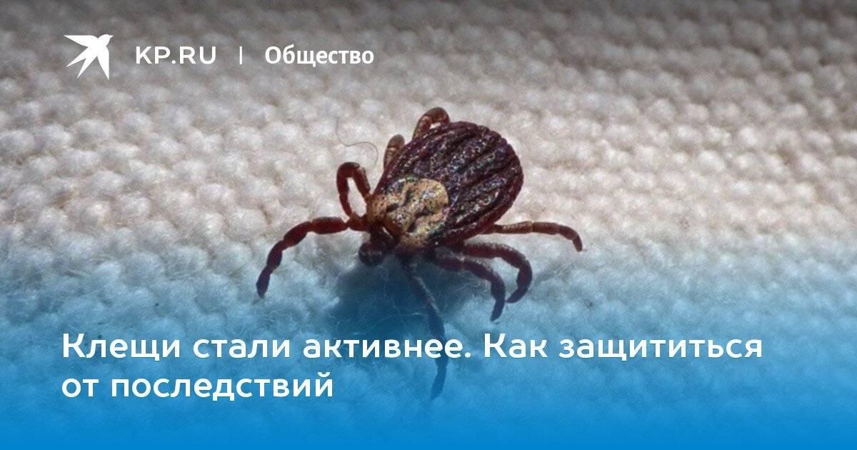 Откуда берутся перьевые клещи в подушках: описание насекомого, причины и симптомы появления, методы борьбы, эффективные препараты