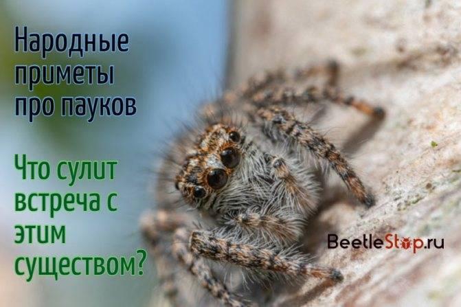 Откуда берутся пауки в домах и квартирах и как от них можно избавиться