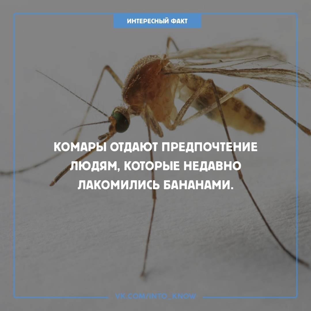 Сода от укусов комаров для детей и взрослых