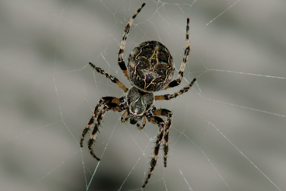Почему в квартире бывает много пауков?
