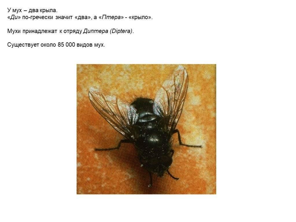 Поразительный дизайн полета насекомых