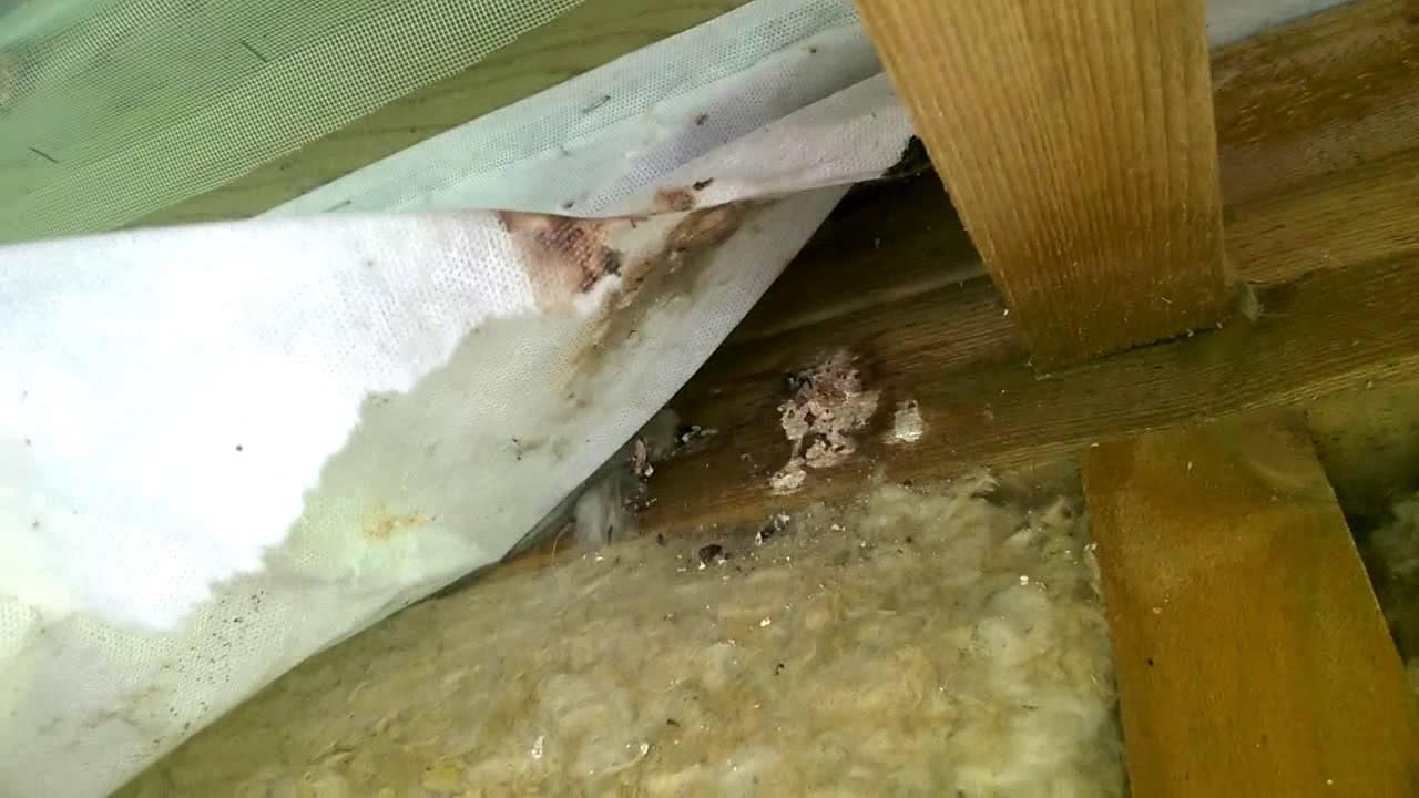 Как быть с грызунами в каркасном доме: как защитить при жилье и строительстве: советы +фото и видео