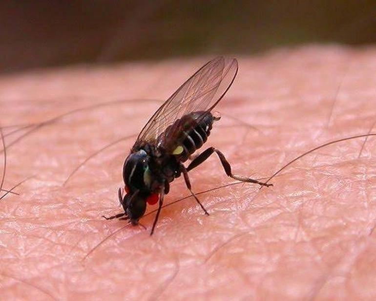Муха кусается. почему кусаются мухи и можно ли защитить от них своего питомца