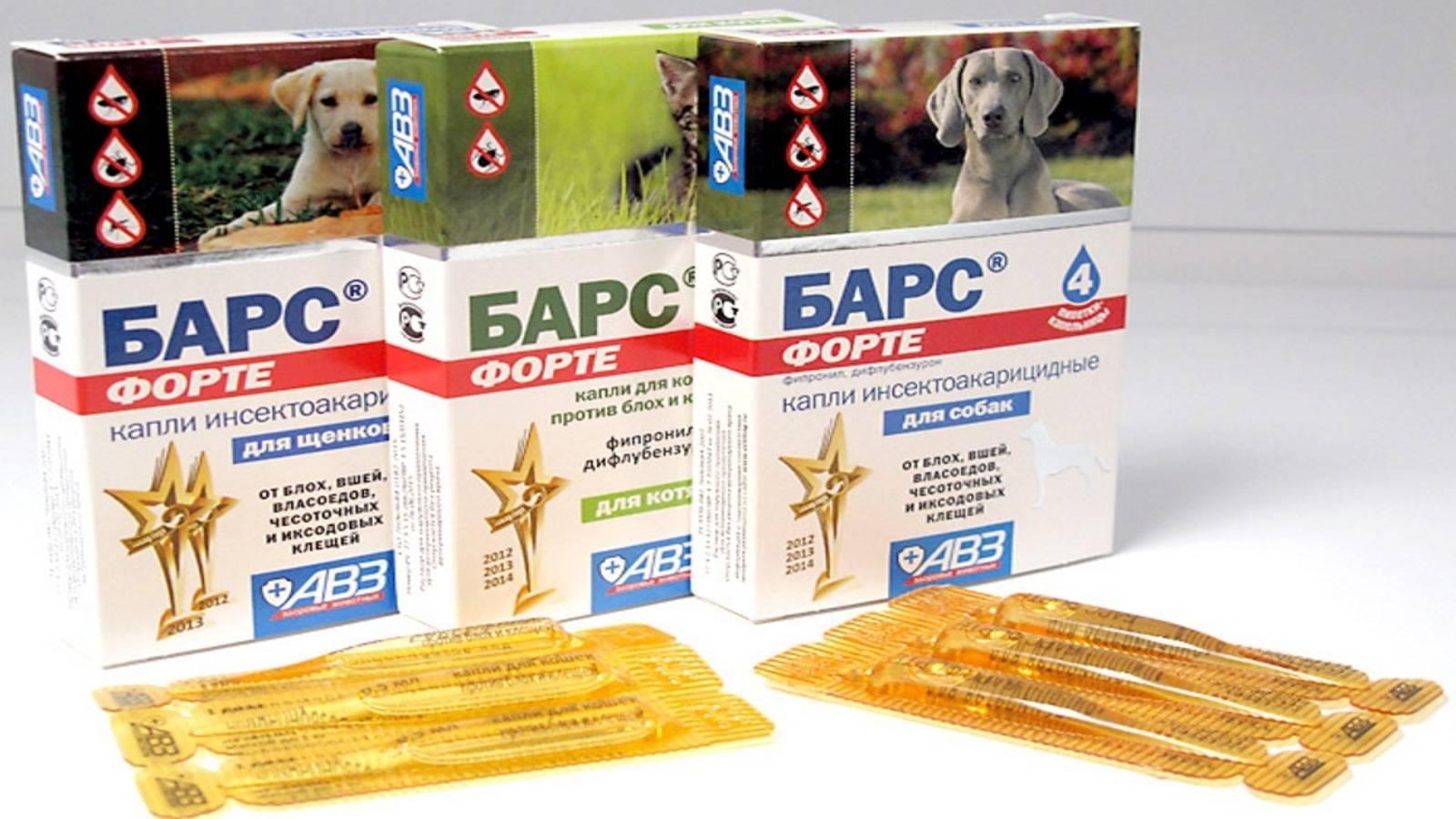 Капли барс от клещей и блох у кошек и собак: обзор и советы по использованию