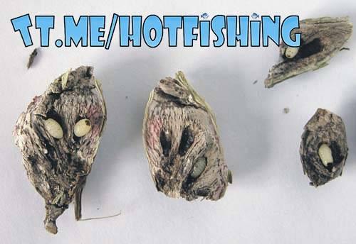 Как выглядят личинки моли и как избавиться от них