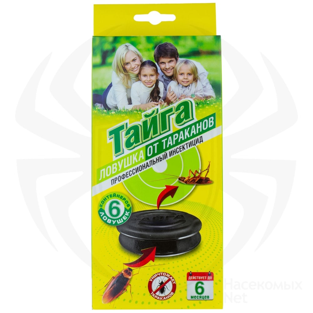 Изготовление ловушек для муравьёв в домашних условиях
