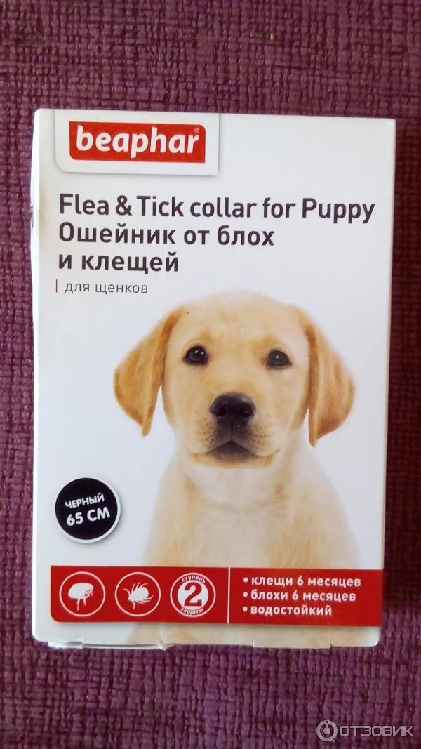 Ошейник для собак от блох и клещей