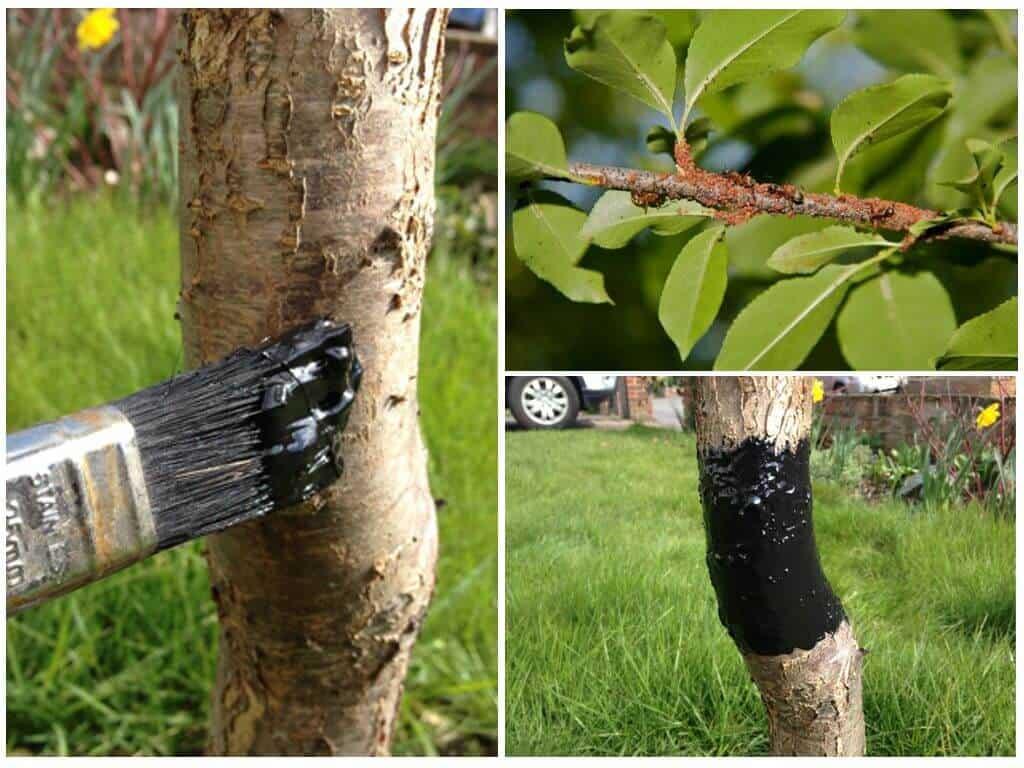 Борьба с тлей на деревьях: химические средства и народные методы