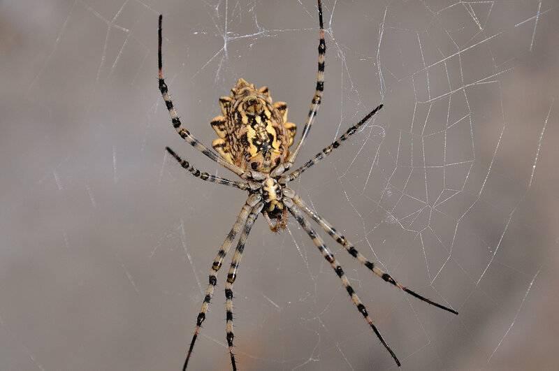 Редкие пауки со всего мира: описания и фото
