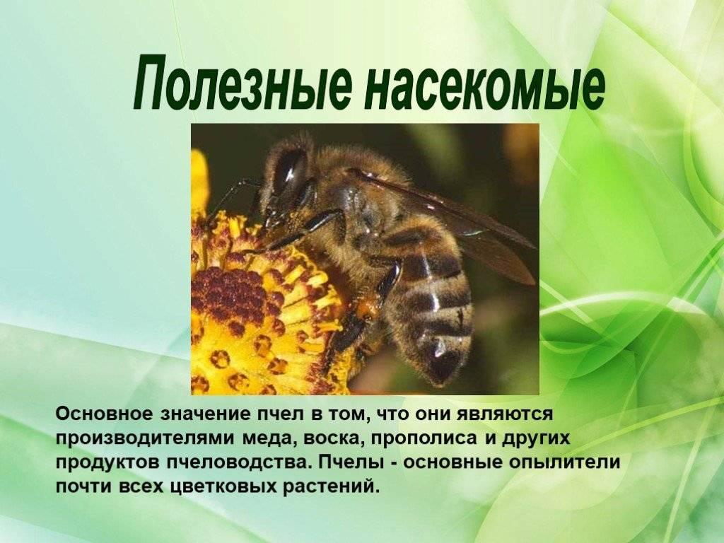 Для чего нужны осы
