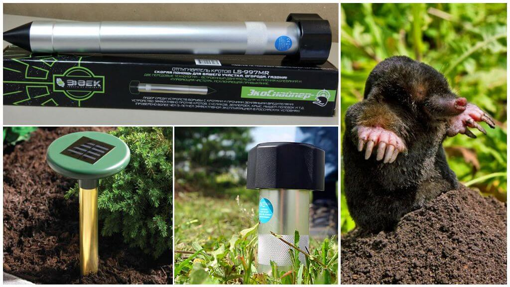 Как избавиться от кротов в огороде, эффективные средства, методы