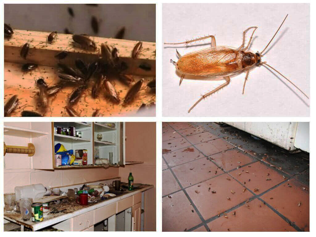 Куда исчезли тараканы из квартир