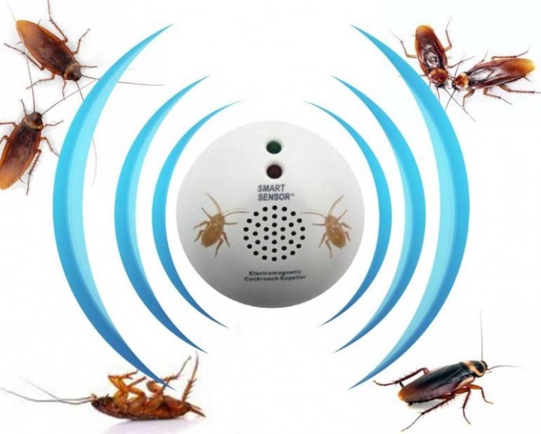 Что любят и что не любят тараканы, чем их можно отпугивать?