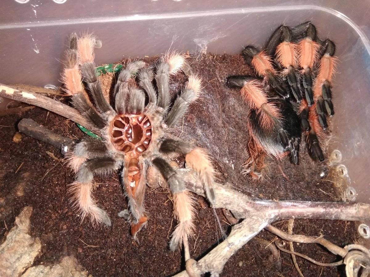 Откуда у паука нить? процесс производства паутины и нити пауками