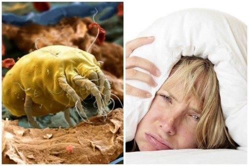 Бельевой клещ – как избавиться в домашних условиях