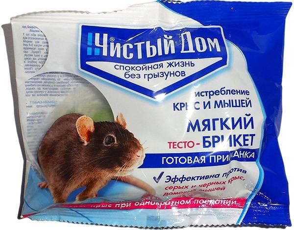 Чем травить крыс и мышей, чтобы быстро избавиться от их присутствия в доме