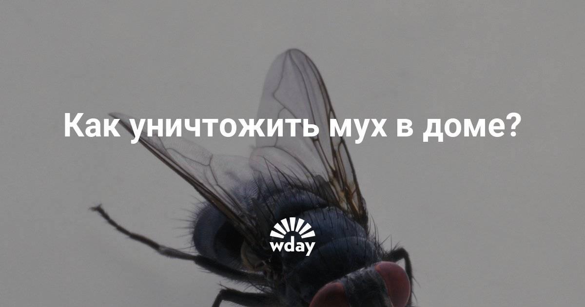 Как избавиться от мух в доме или квартире, борьба с насекомыми народными средствами и химикатами