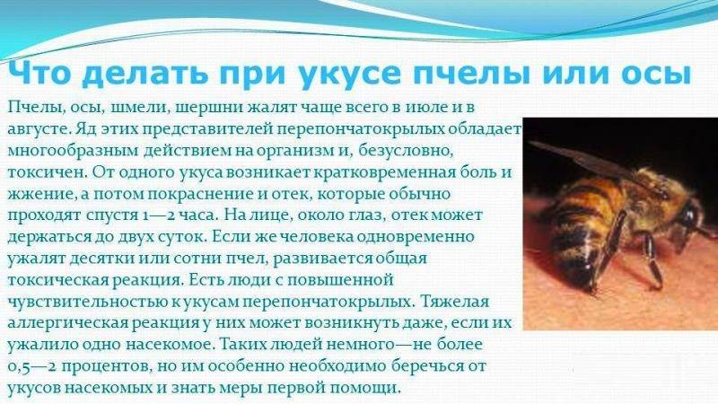 Что делать если укусил шершень: первая помощь при укусе шершня