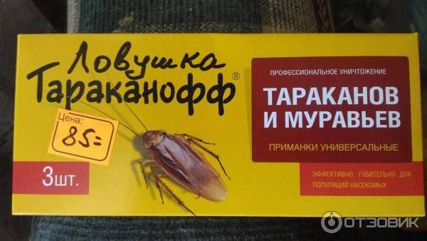 Ловушки для муравьев в квартире и доме