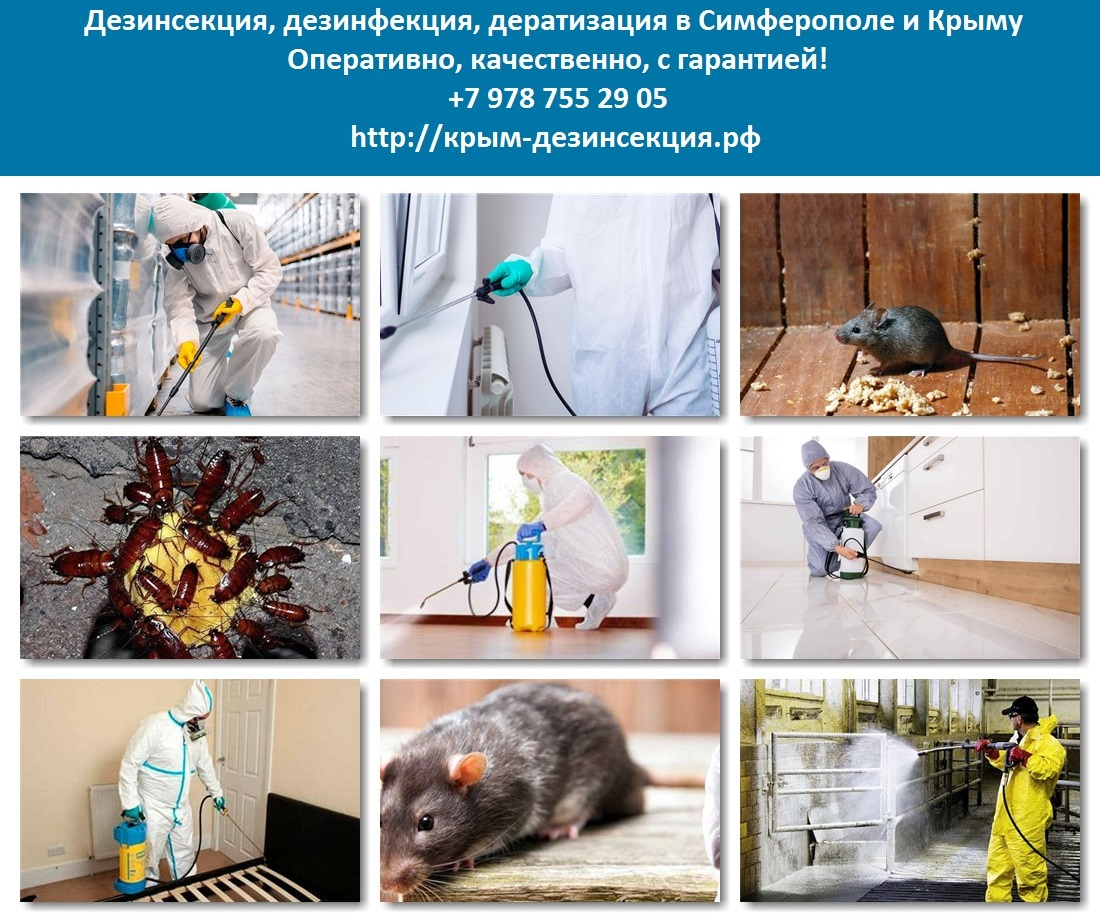 Профессиональная и домашняя обработка квартиры от мышей