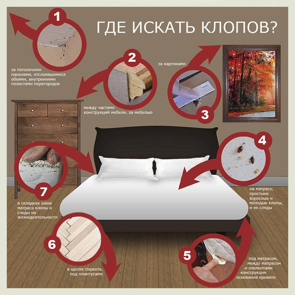 Как обнаружить клопов в квартире: где прячутся постельные клопы в постели