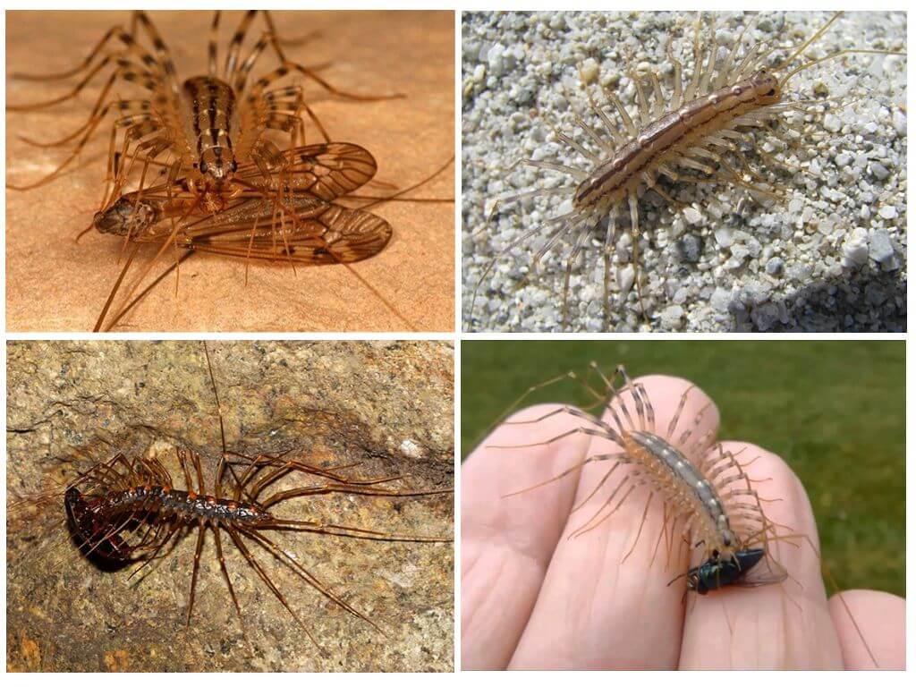 Мухоловка: опасно ли насекомое для человека, способы борьбы — насекомые вредители