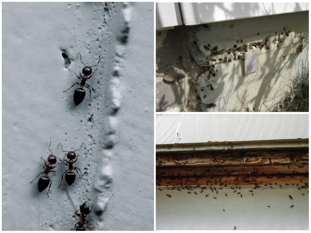 Как и где зимуют муравьи: спят в муравейнике, умирают или трудятся?