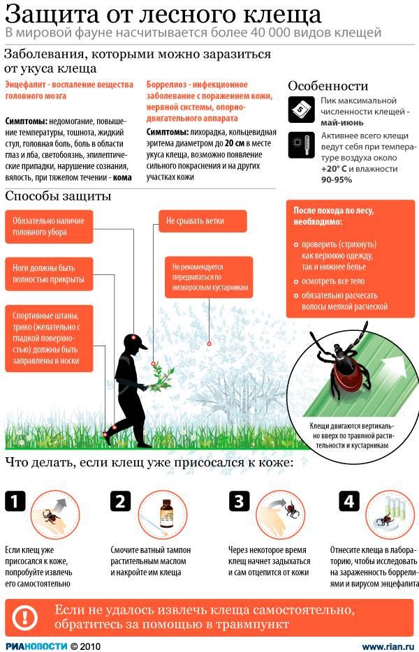 Как защититься от клещей на природе: меры предосторожности, памятка для родителей, профилактика укусов