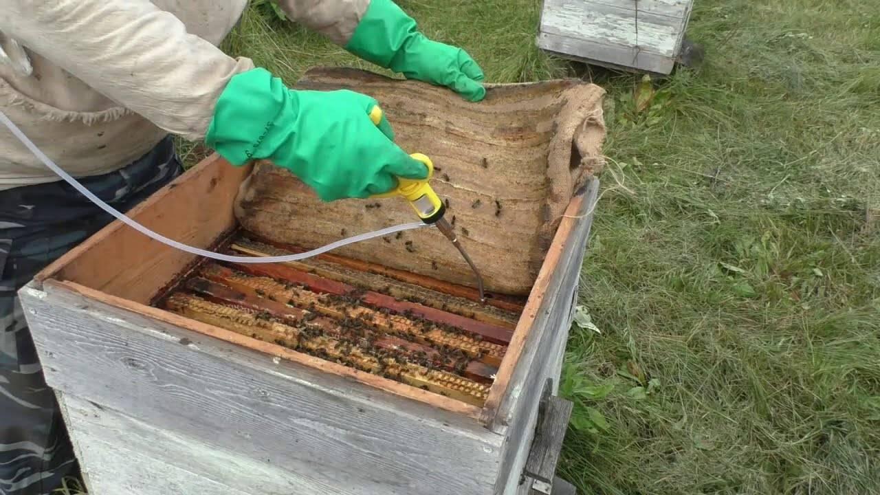 Бипин для пчел: инструкция, обработка пчел от клеща варроа