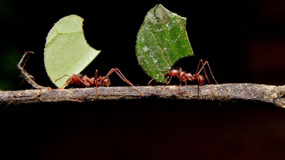 Почему умирают муравьи в формикарии: обратимые и необратимые причины