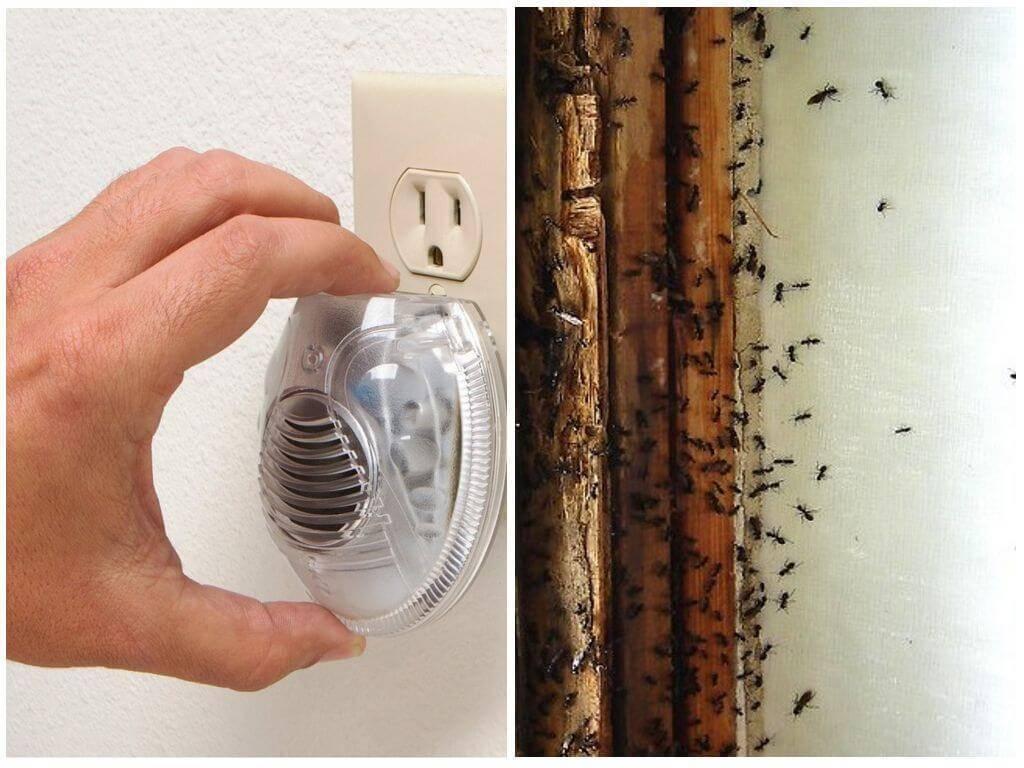 Как выбрать и где установить ультразвуковой отпугиватель от муравьев