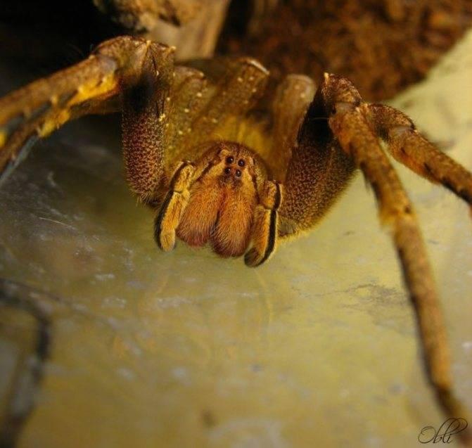Укус паука: последствия и что делать при паучьем укусе - здоровье человека, симптомы и лечение заболеваний