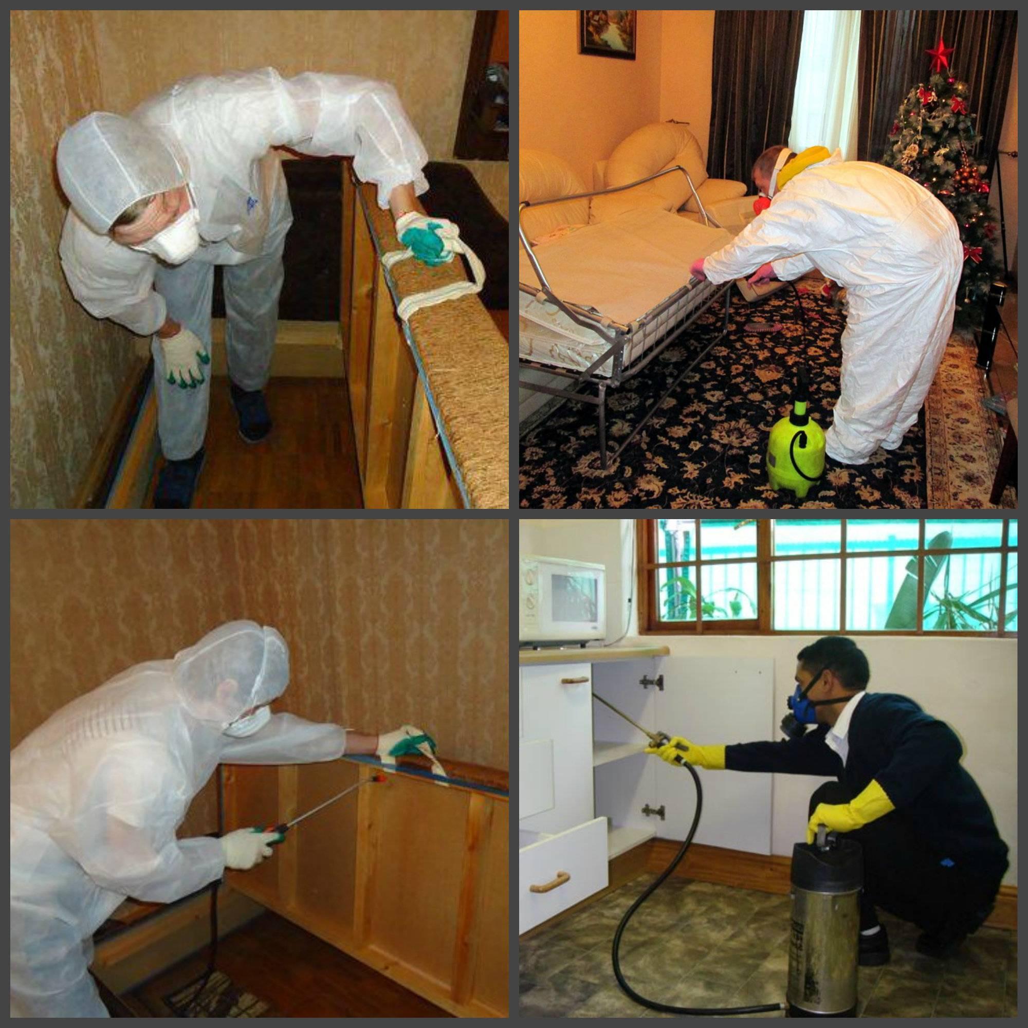 Средства от клопов в домашних условиях: чего боятся паразиты, чем лучше их травить в квартире и доме