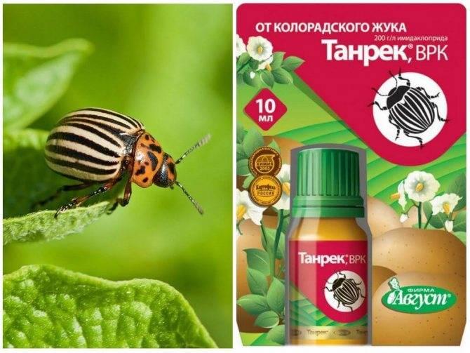 Табу от колорадского жука, инструкция по применению - как использовать препарат?