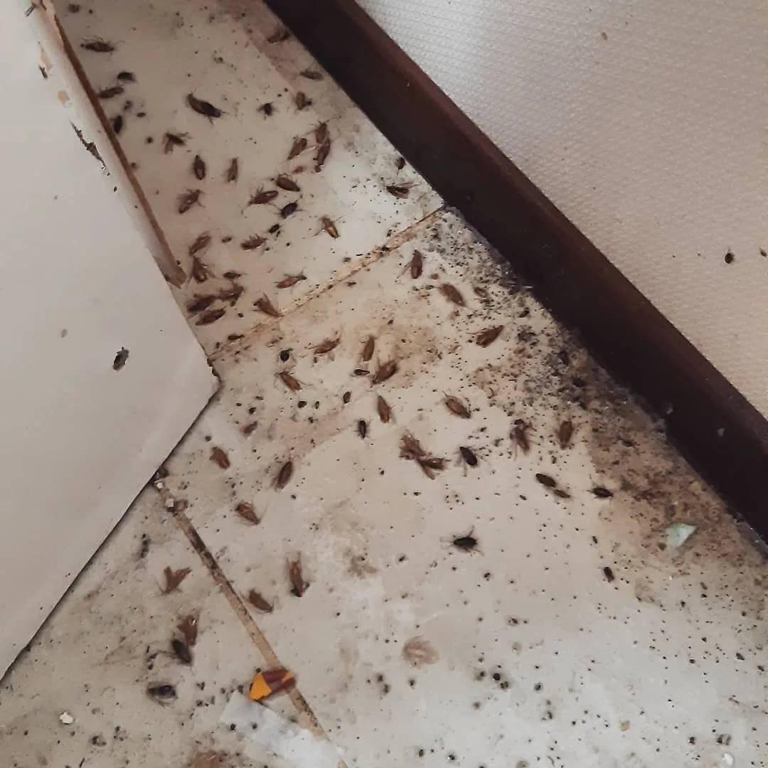 Чтобы понять, как избавиться от тараканов в общежитии, нужно следовать инструкции!