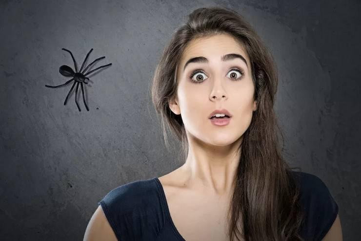 Как называется фобия боязни пауков и как от нее избавиться