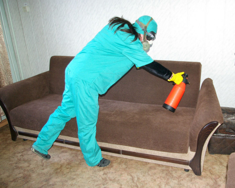 Как вывести клопов из квартиры самостоятельно и быстро